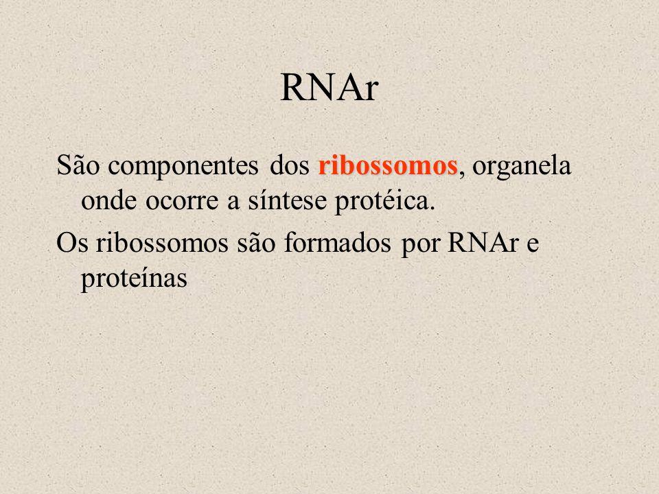RNAr ribossomos São componentes dos ribossomos, organela onde ocorre a síntese protéica. Os ribossomos são formados por RNAr e proteínas