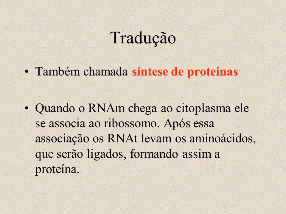 Tradução síntese de proteínasTambém chamada síntese de proteínas Quando o RNAm chega ao citoplasma ele se associa ao ribossomo. Após essa associação o