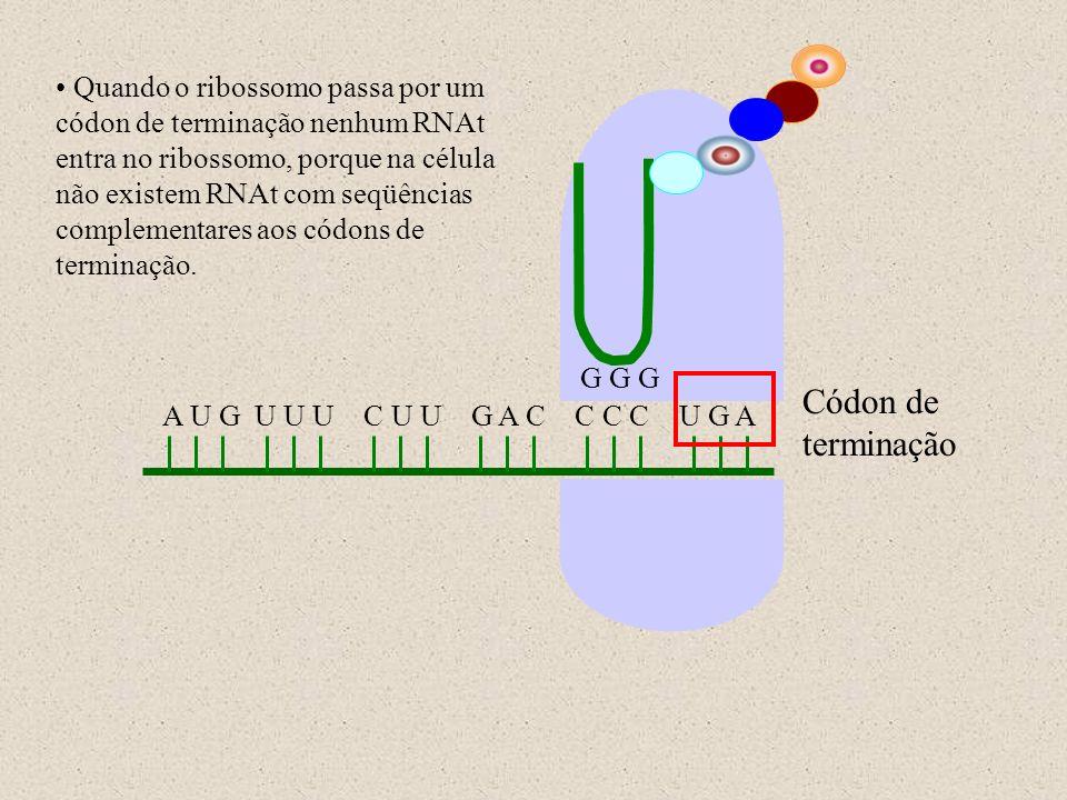 A U G U U U C U U G A C C C C U G A G G G Códon de terminação Quando o ribossomo passa por um códon de terminação nenhum RNAt entra no ribossomo, porq
