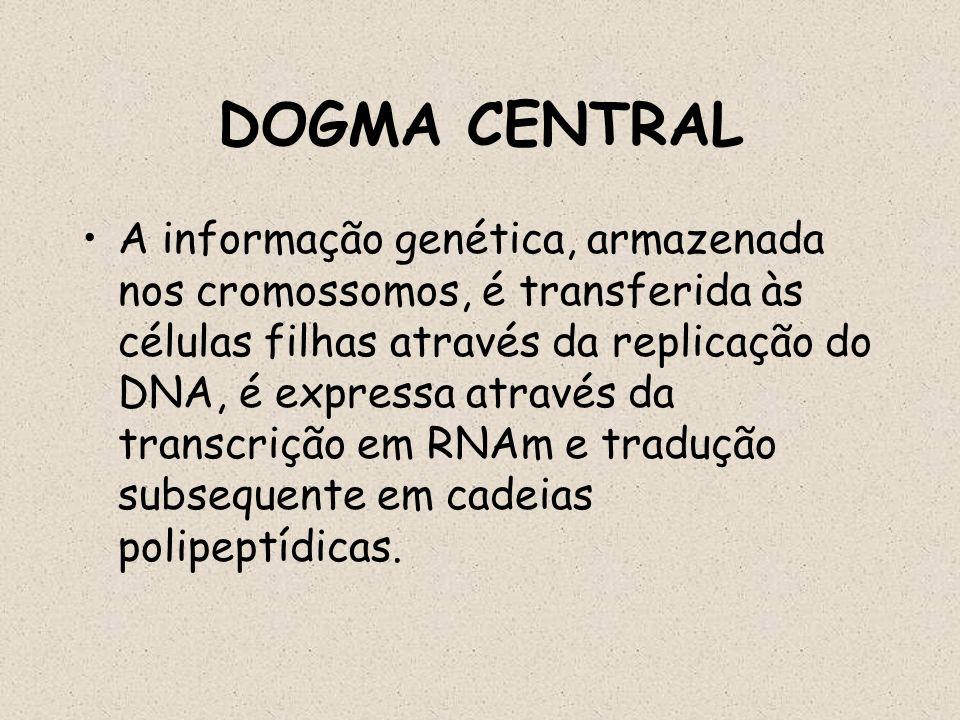 DOGMA CENTRAL A informação genética, armazenada nos cromossomos, é transferida às células filhas através da replicação do DNA, é expressa através da t