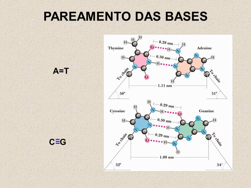 A U G U U U C U U G A C C C C U G A U A C A A AG A A Uma enzima presente na subunidade maior do ribossomo realiza a ligação peptídica entre os aminoácidos.