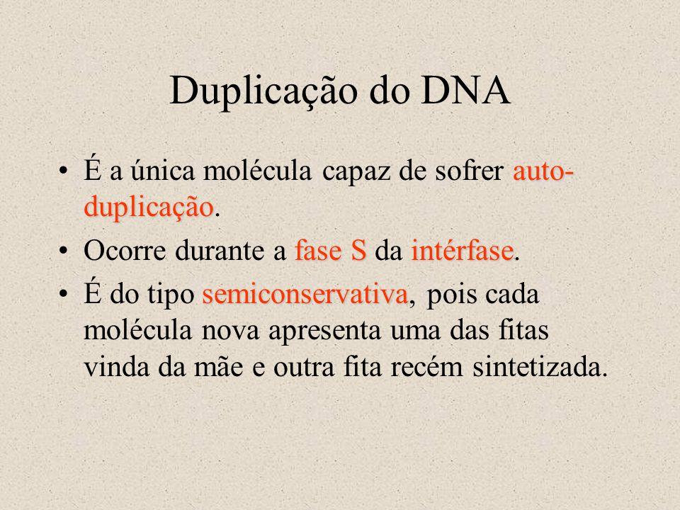 Duplicação do DNA auto- duplicaçãoÉ a única molécula capaz de sofrer auto- duplicação. fase SintérfaseOcorre durante a fase S da intérfase. semiconser