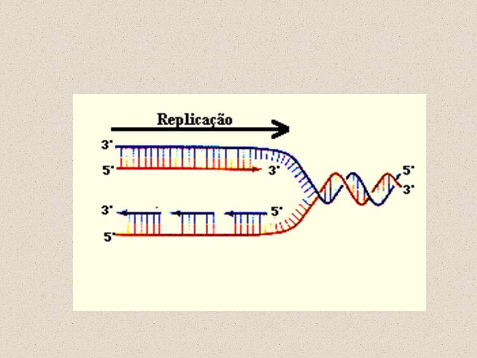A U G U U U C U U G A C C C C U G A G G G Códon de terminação Quando o ribossomo passa por um códon de terminação nenhum RNAt entra no ribossomo, porque na célula não existem RNAt com seqüências complementares aos códons de terminação.