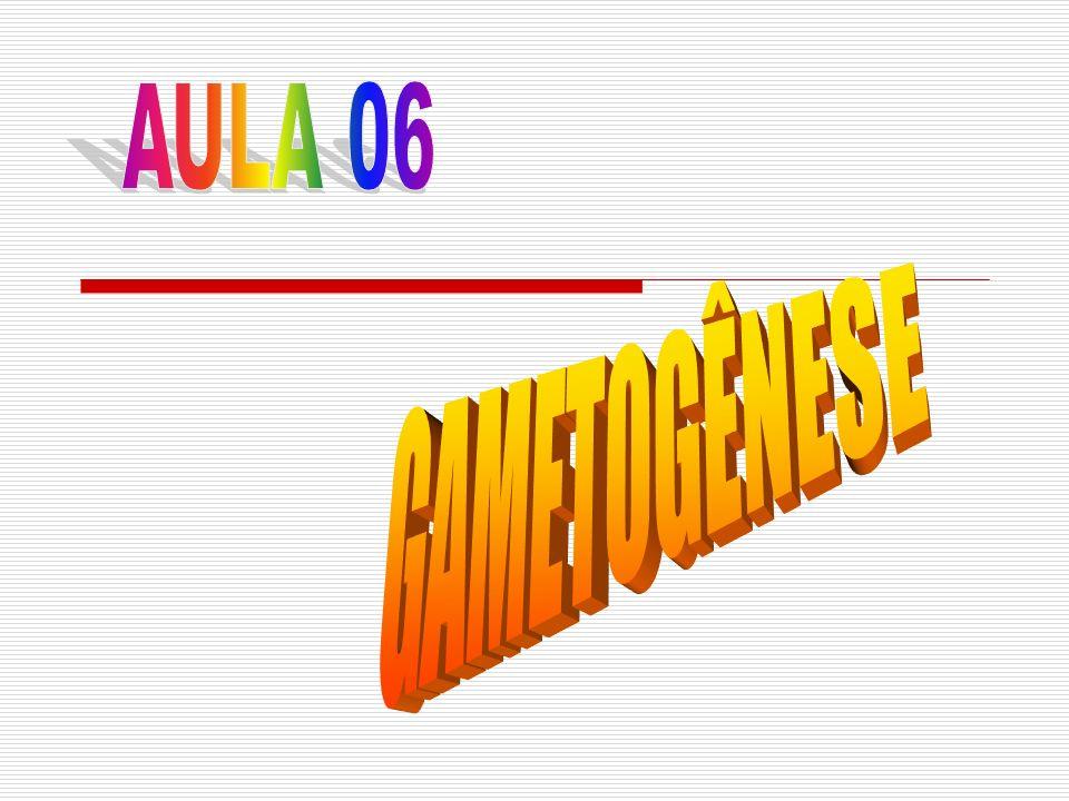 O que é gametogênese?