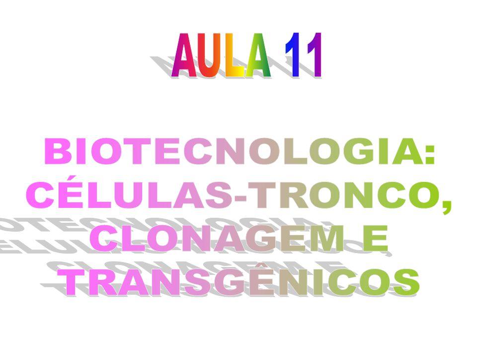 Clonagem Originada da palavra grega Kólon, é basicamente uma forma de reprodução assexuada – indivíduos idênticos ao provedor do DNA.