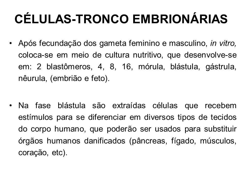 CÉLULAS-TRONCO EMBRIONÁRIAS Após fecundação dos gameta feminino e masculino, in vitro, coloca-se em meio de cultura nutritivo, que desenvolve-se em: 2