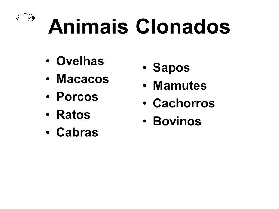 Animais Clonados Ovelhas Macacos Porcos Ratos Cabras Sapos Mamutes Cachorros Bovinos