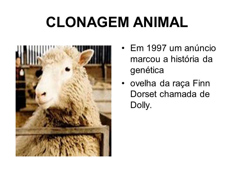 CLONAGEM ANIMAL Em 1997 um anúncio marcou a história da genética ovelha da raça Finn Dorset chamada de Dolly.
