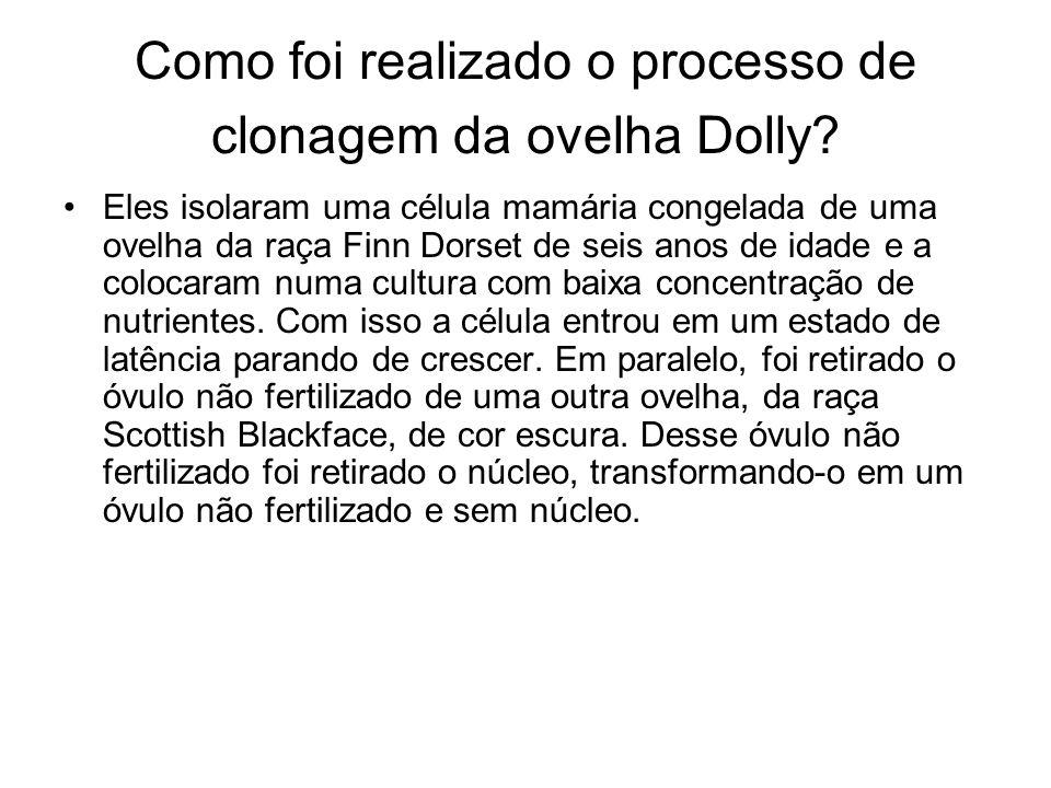 Como foi realizado o processo de clonagem da ovelha Dolly? Eles isolaram uma célula mamária congelada de uma ovelha da raça Finn Dorset de seis anos d