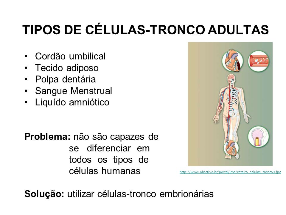 TIPOS DE CÉLULAS-TRONCO ADULTAS Cordão umbilical Tecido adiposo Polpa dentária Sangue Menstrual Liquído amniótico Problema: não são capazes de se dife