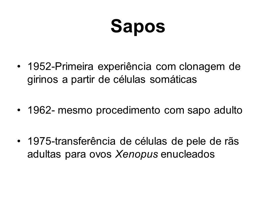 Sapos 1952-Primeira experiência com clonagem de girinos a partir de células somáticas 1962- mesmo procedimento com sapo adulto 1975-transferência de c