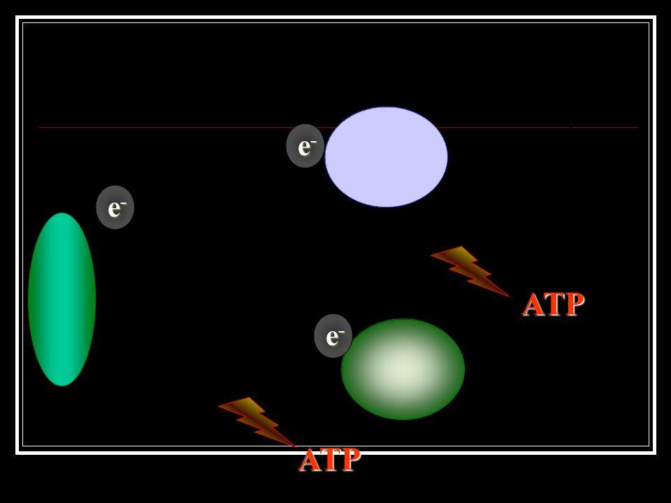 e-e-e-e- A luz solar incide na molécula de clorofila. Essa molécula armazena essa energia e elétrons são liberados.