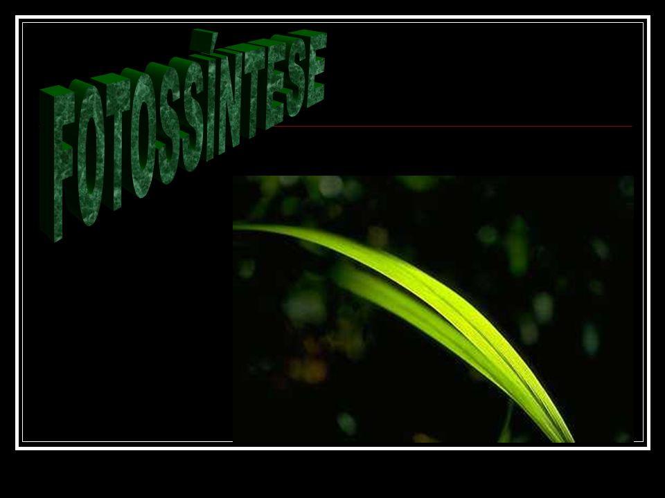 Ocorre nos grana dos cloroplastos.