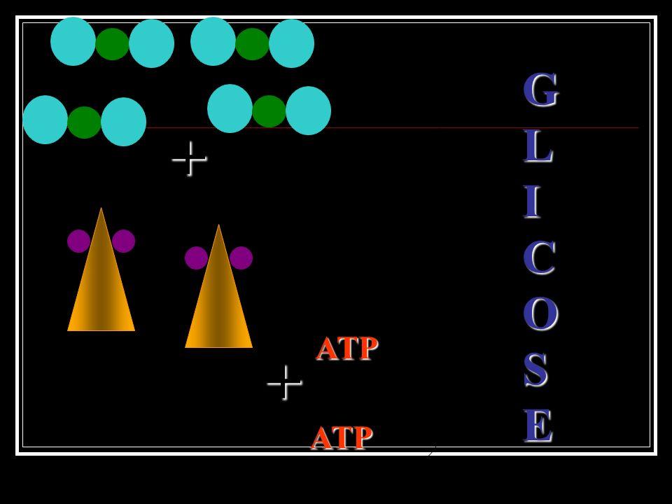 Há a utilização dos produtos da fase luminosa (ATP e NADPH 2 ). Absorção e fixação do CO 2. Formação de açúcar.