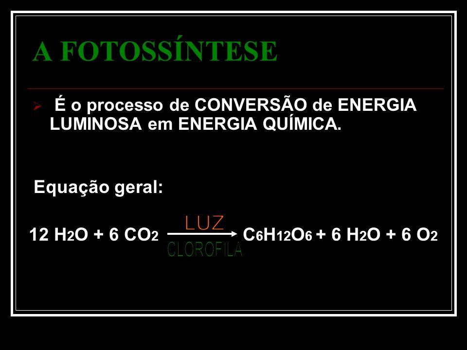 A FOTOSSÍNTESE É o processo de CONVERSÃO de ENERGIA LUMINOSA em ENERGIA QUÍMICA.