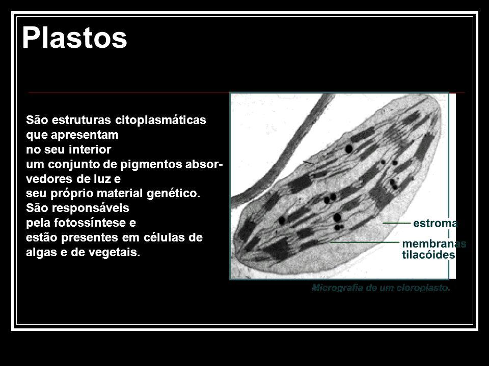 Plastos São estruturas citoplasmáticas que apresentam no seu interior um conjunto de pigmentos absor- vedores de luz e seu próprio material genético.