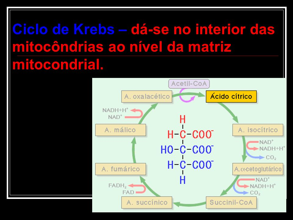 ...mas como há a presença de O 2... Há a formação de 2 NADH 2 e o ACIDO PIRUVICO penetra nas MITOCÔNDRIAS. C 6 H 12 0 6 (glicose) Gasto de 2 ATP 2 C 3