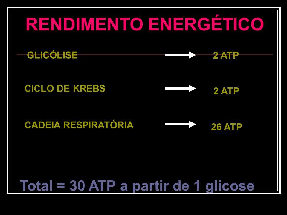 RENDIMENTO ENERGÉTICO DA RESPIRAÇÃO AERÓBIA ETAPARENDIMENTO GLICÓLISE CICLO DE KREBS ENTRAR NA MITOCÔNDRIA FOSFORILAÇÃO OXIDATIVA TOTAL + 2 ATP - 2 AT