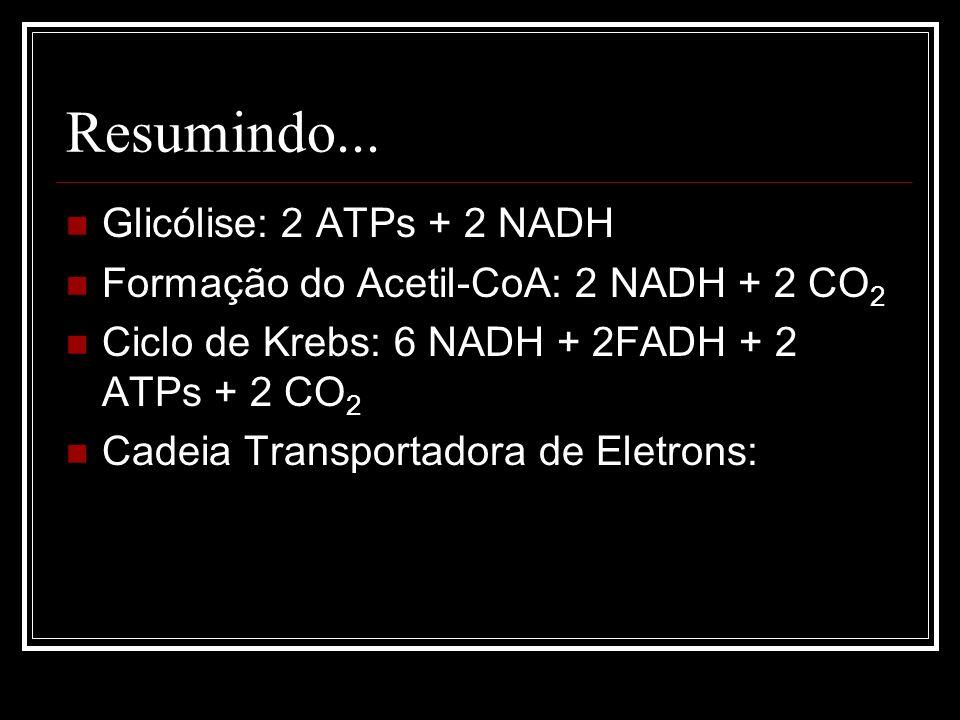 RENDIMENTO ENERGÉTICO GLICÓLISE (CITOSOL) CICLO DE KREBS (MATRIZ MITOCONDRIAL) CADEIA RESPIRATÓRIA (CRISTAS MITOCONDRIAIS) 2 ATP 26 ATP Total = 30 ATP