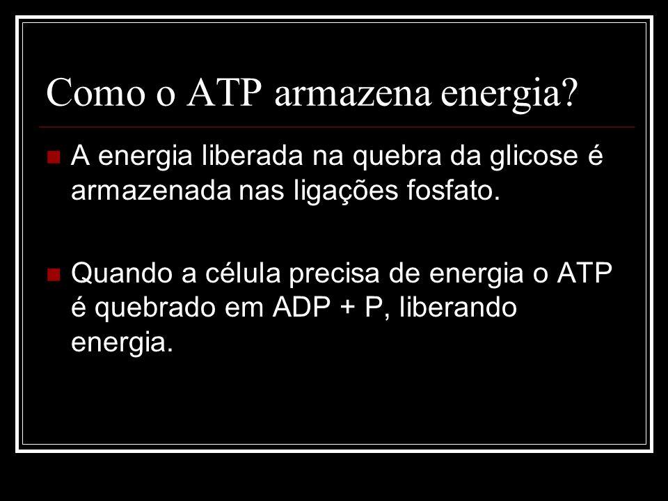 Como o ATP armazena energia.