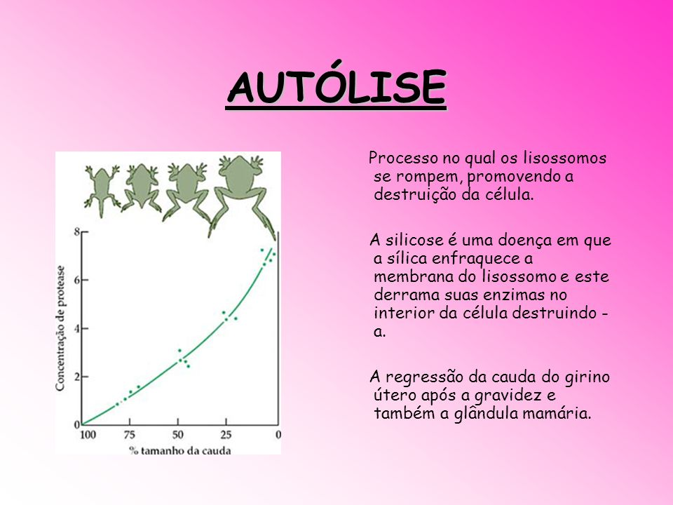AUTÓLISE Processo no qual os lisossomos se rompem, promovendo a destruição da célula. A silicose é uma doença em que a sílica enfraquece a membrana do