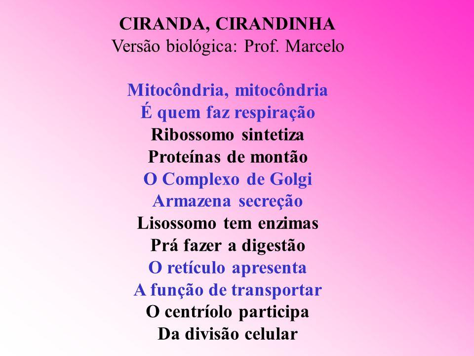 CIRANDA, CIRANDINHA Versão biológica: Prof. Marcelo Mitocôndria, mitocôndria É quem faz respiração Ribossomo sintetiza Proteínas de montão O Complexo
