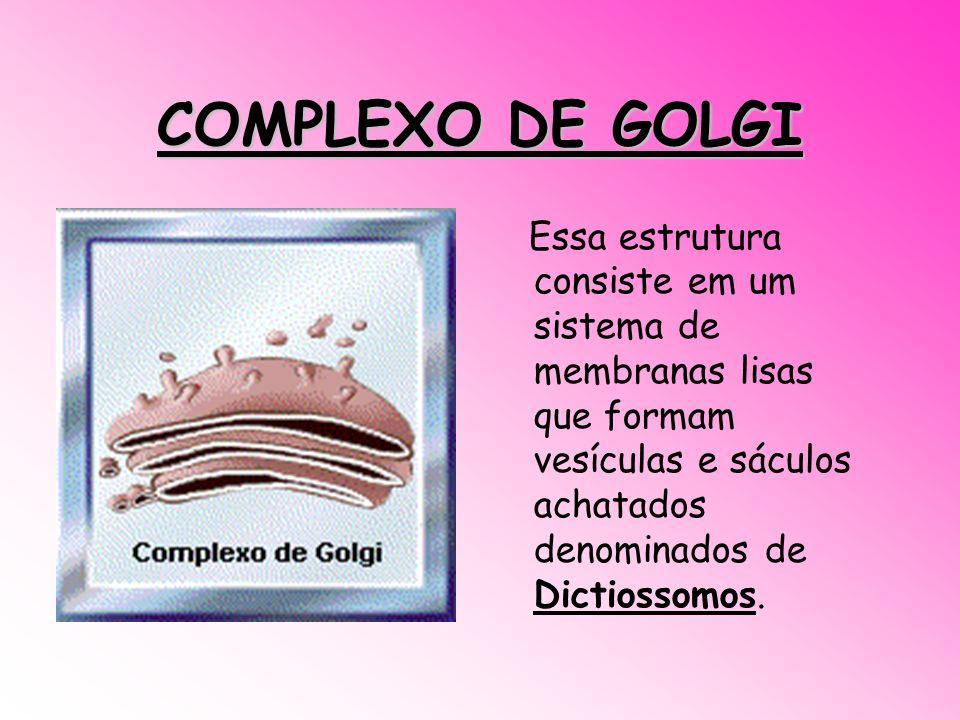 COMPLEXO DE GOLGI Essa estrutura consiste em um sistema de membranas lisas que formam vesículas e sáculos achatados denominados de Dictiossomos.