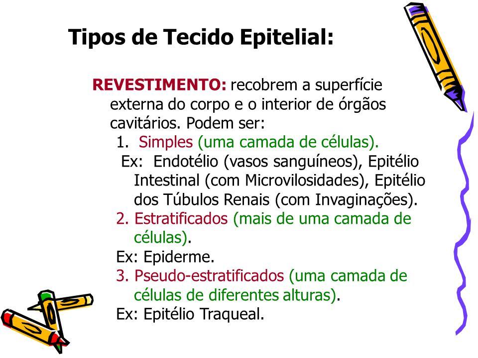 Tipos de Tecido Epitelial: REVESTIMENTO: recobrem a superfície externa do corpo e o interior de órgãos cavitários. Podem ser: 1. Simples (uma camada d