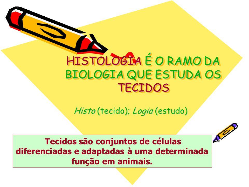 Histologia Animal Tecido Conjuntivo: –Formado por células amorfas com abundante matriz intercelular, sendo responsável pelo preenchimento, sustentação e transporte de substâncias pelo corpo.