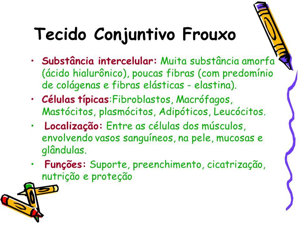 Tecido Conjuntivo Frouxo Substância intercelular: Muita substância amorfa (ácido hialurônico), poucas fibras (com predomínio de colágenas e fibras elá