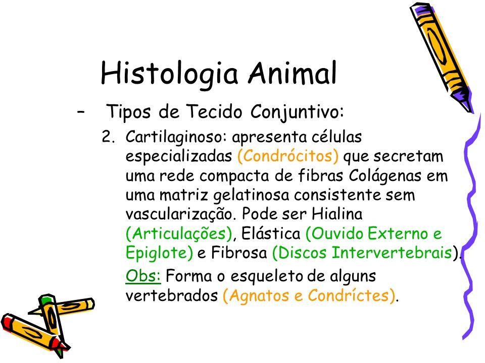 Histologia Animal –Tipos de Tecido Conjuntivo: 2.Cartilaginoso: apresenta células especializadas (Condrócitos) que secretam uma rede compacta de fibra