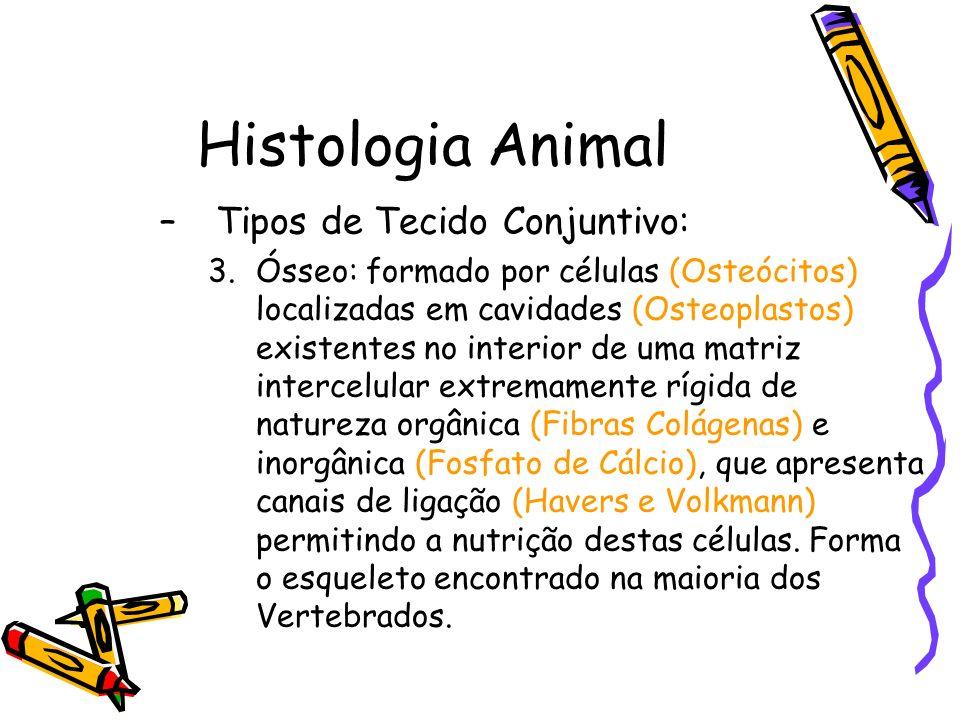 Histologia Animal –Tipos de Tecido Conjuntivo: 3.Ósseo: formado por células (Osteócitos) localizadas em cavidades (Osteoplastos) existentes no interio