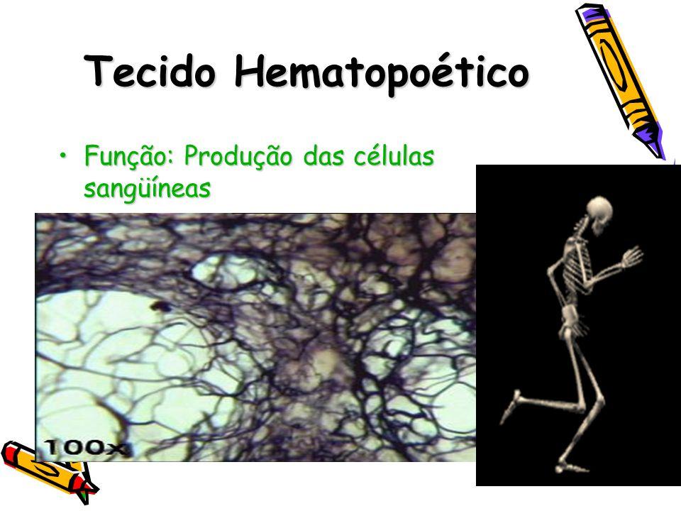Tecido Hematopoético Função: Produção das células sangüíneasFunção: Produção das células sangüíneas