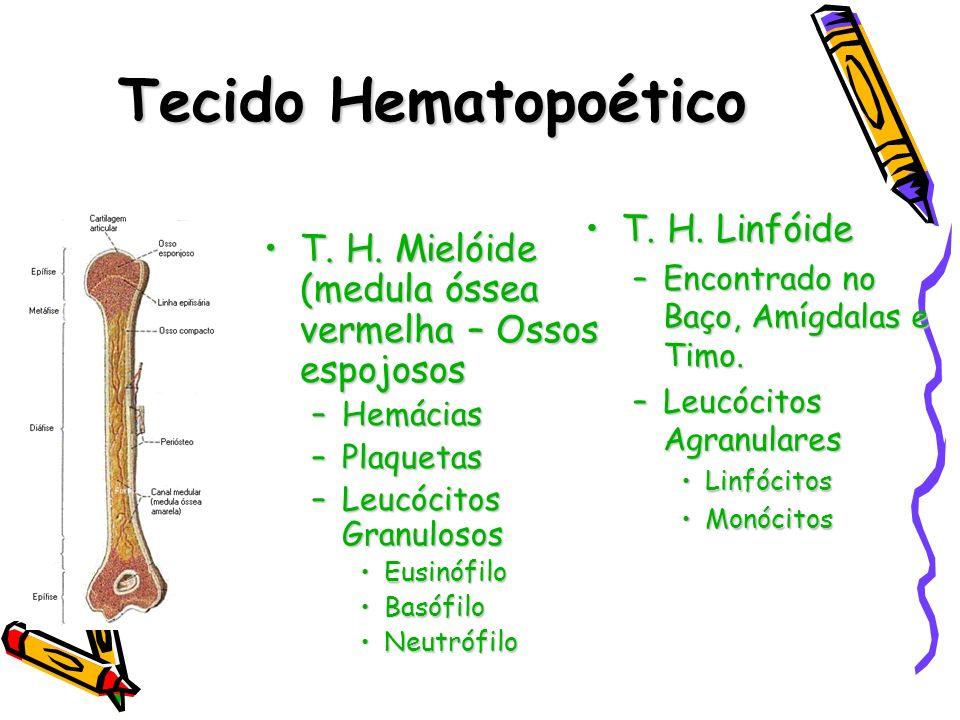 Tecido Hematopoético T. H. Mielóide (medula óssea vermelha – Ossos espojososT. H. Mielóide (medula óssea vermelha – Ossos espojosos –Hemácias –Plaquet