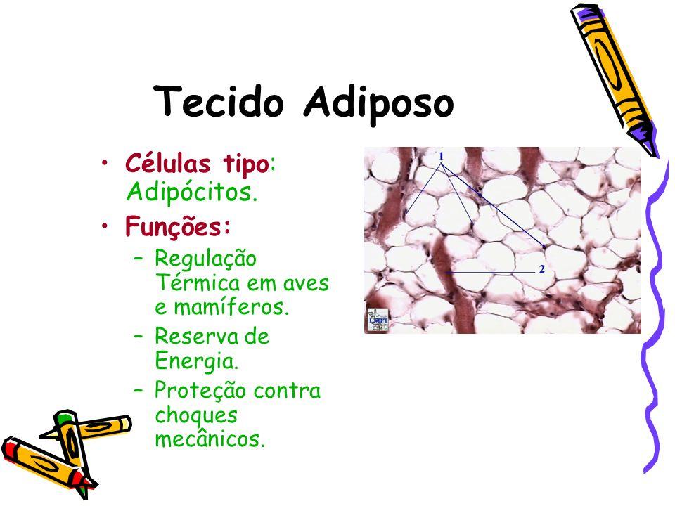 Tecido Adiposo Células tipo: Adipócitos. Funções: –Regulação Térmica em aves e mamíferos. –Reserva de Energia. –Proteção contra choques mecânicos.