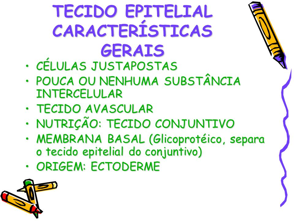 TECIDO EPITELIAL CARACTERÍSTICAS GERAIS CÉLULAS JUSTAPOSTASCÉLULAS JUSTAPOSTAS POUCA OU NENHUMA SUBSTÂNCIA INTERCELULARPOUCA OU NENHUMA SUBSTÂNCIA INT