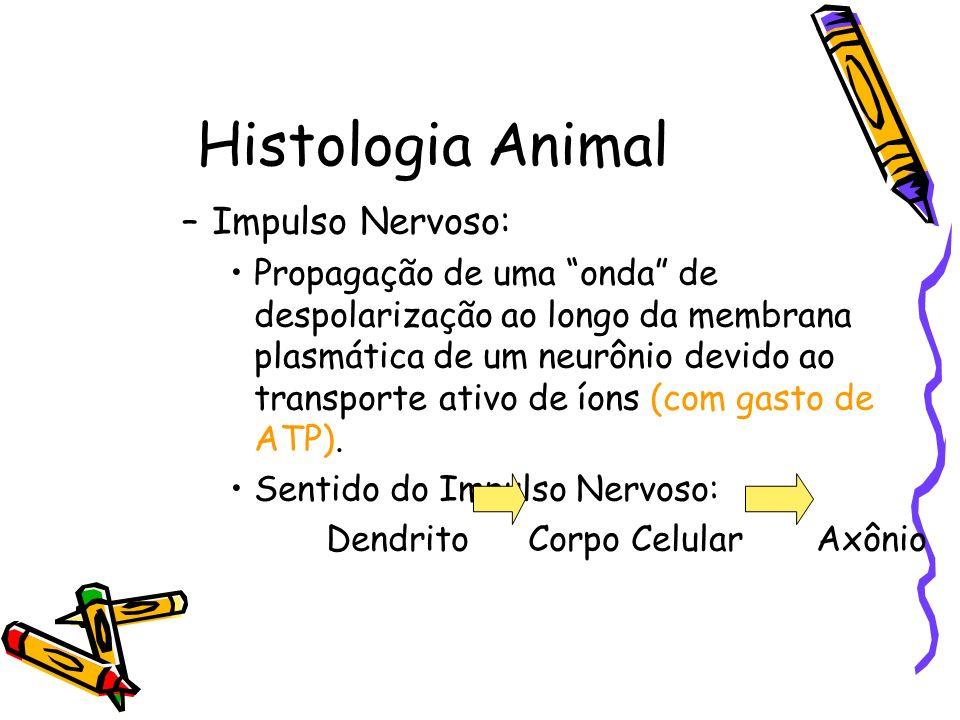 Histologia Animal –Impulso Nervoso: Propagação de uma onda de despolarização ao longo da membrana plasmática de um neurônio devido ao transporte ativo