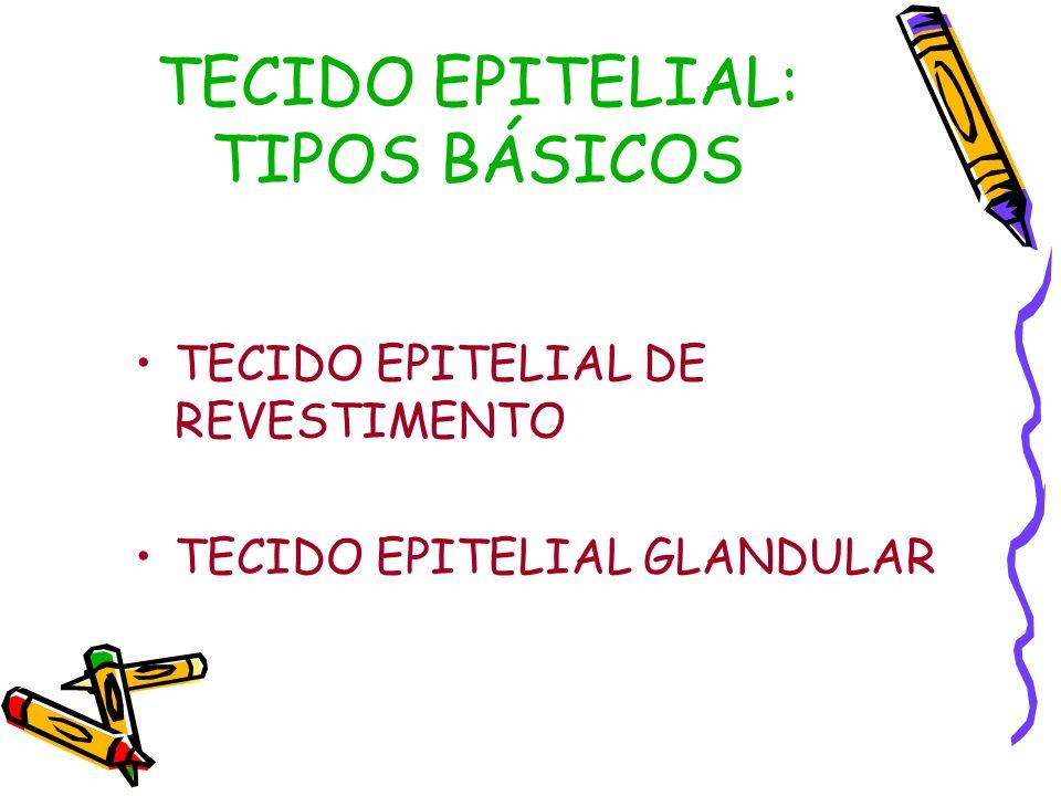 TECIDO EPITELIAL DE REVESTIMENTO FUNÇÃO: REVESTIR PELE: REVESTIMENTO EXTERNO COMPOSTA POR TRÊS CAMADAS (EPIDERME, DERME E HIPODERME) MUCOSA: REVESTIMENTO INTERNO COM ABERTURA PARA O MEIO EXTERNO.