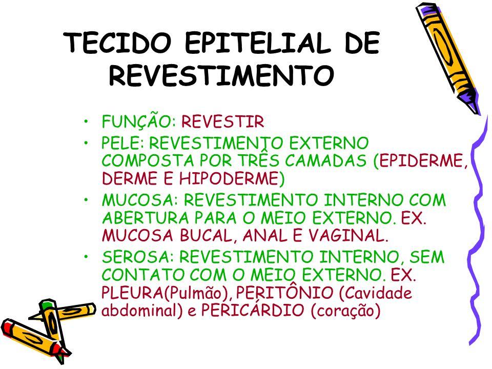 TECIDO EPITELIAL DE REVESTIMENTO FUNÇÃO: REVESTIR PELE: REVESTIMENTO EXTERNO COMPOSTA POR TRÊS CAMADAS (EPIDERME, DERME E HIPODERME) MUCOSA: REVESTIME