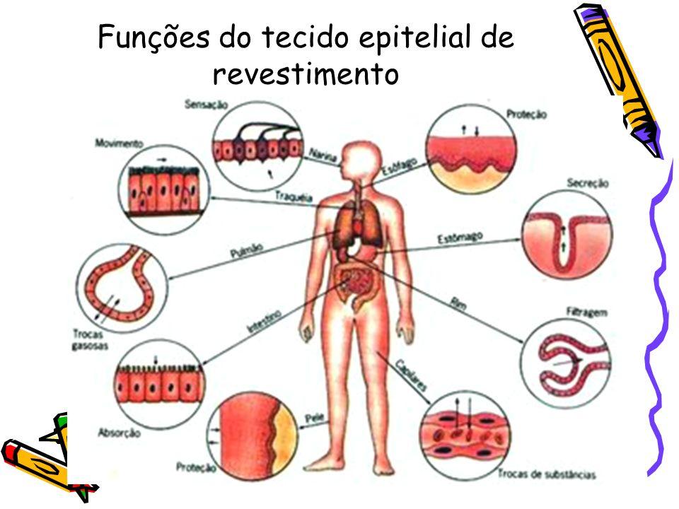 CÉLULAS ANEXAS OU DA NEURÓGLIA: adaptadas a nutrição e sustentação dos neurônios.