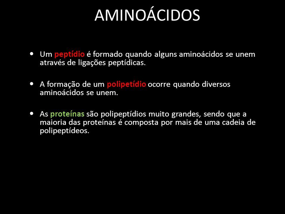 AMINOÁCIDOS Um peptídio é formado quando alguns aminoácidos se unem através de ligações peptídicas. A formação de um polipetídio ocorre quando diverso