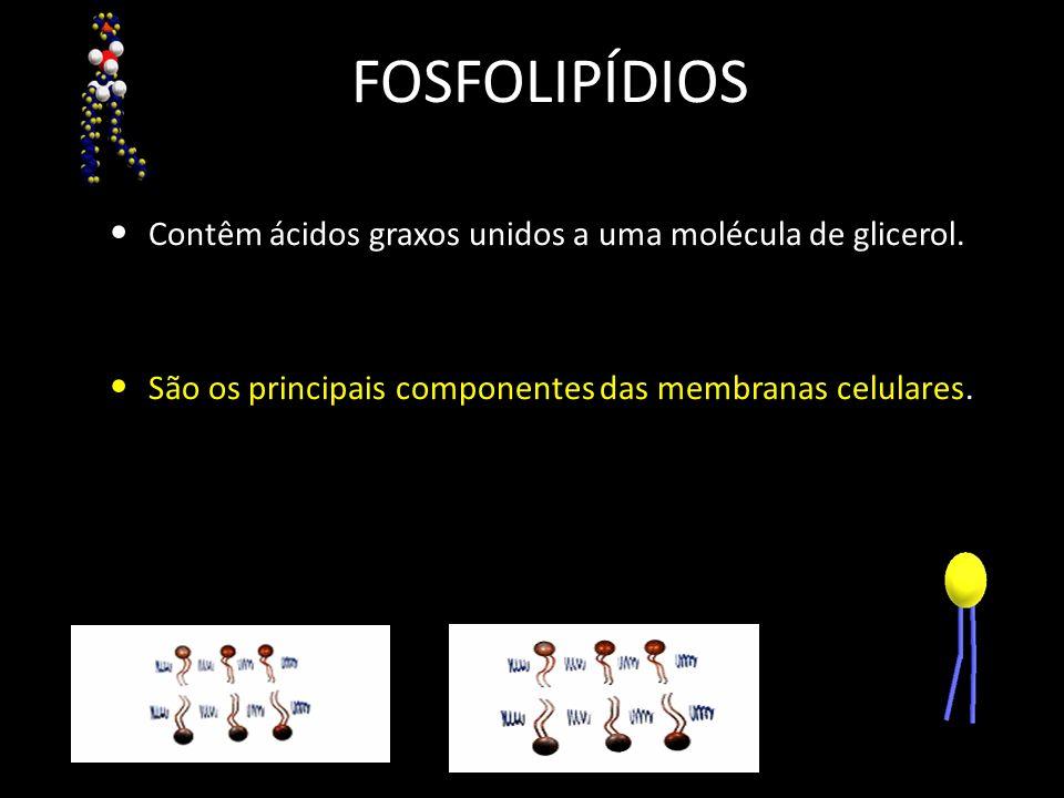 FOSFOLIPÍDIOS Contêm ácidos graxos unidos a uma molécula de glicerol. São os principais componentes das membranas celulares.