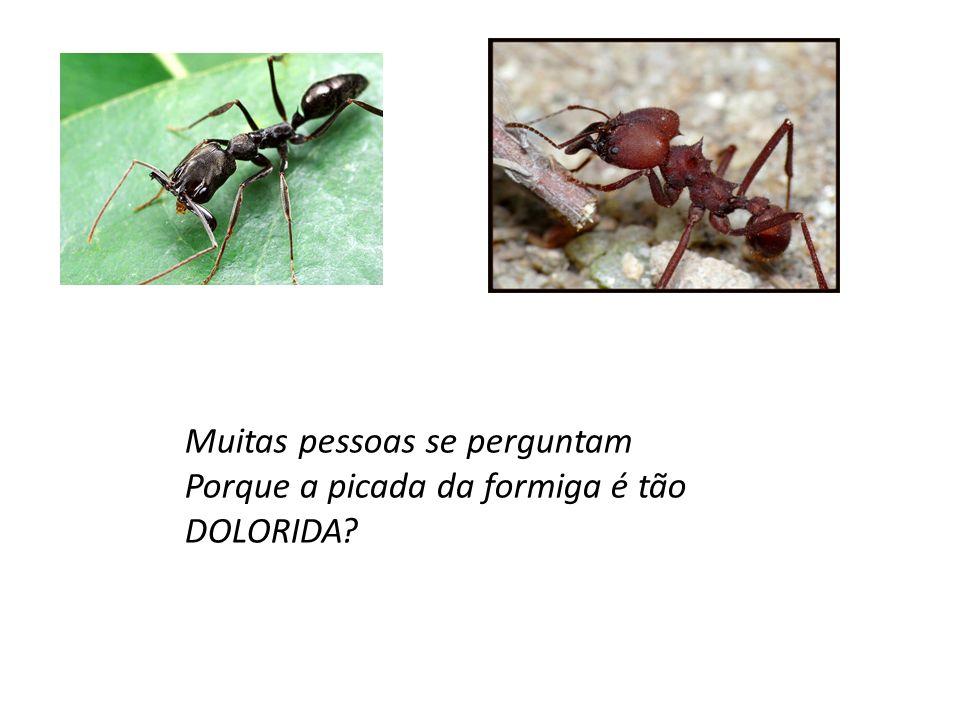 Muitas pessoas se perguntam Porque a picada da formiga é tão DOLORIDA?
