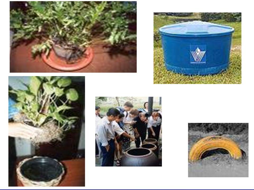 Eliminar os criadouros das larvas. Não deixar água parada e limpa em qualquer tipo de recipiente: Garrafas;Pneus; Pratos de vasos de plantas e xaxim;