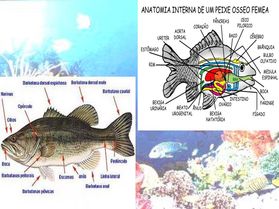 Alguns Sites pesquisados: http://pt.wikipedia.org/wiki/Peixe http://www.saudeanimal.com.br/peixe1.htm http://www.planetabio.com.br http://www.youtube.com/watch?v=saAxNGfhpVM &hl=pt-BR http://www.youtube.com/watch?v=saAxNGfhpVM &hl=pt-BR http://www.youtube.com/watch?v=F3zZotDh5Q0