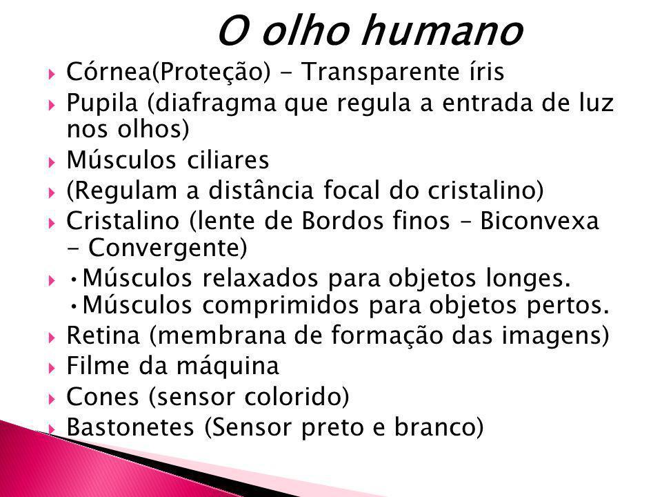 O olho humano Córnea(Proteção) - Transparente íris Pupila (diafragma que regula a entrada de luz nos olhos) Músculos ciliares (Regulam a distância foc