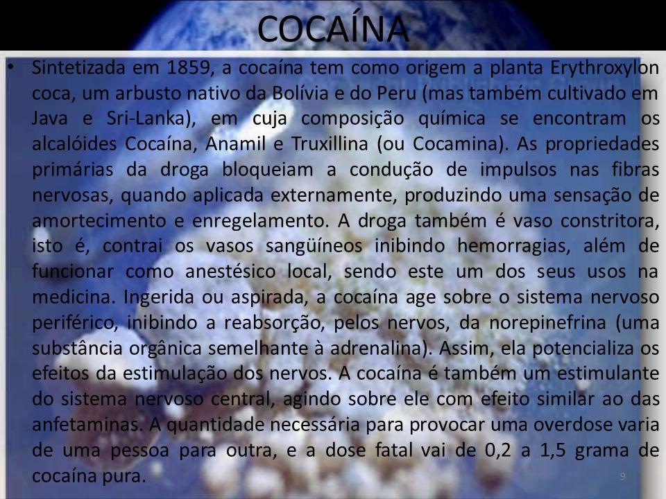 COCAÍNA Sintetizada em 1859, a cocaína tem como origem a planta Erythroxylon coca, um arbusto nativo da Bolívia e do Peru (mas também cultivado em Java e Sri-Lanka), em cuja composição química se encontram os alcalóides Cocaína, Anamil e Truxillina (ou Cocamina).