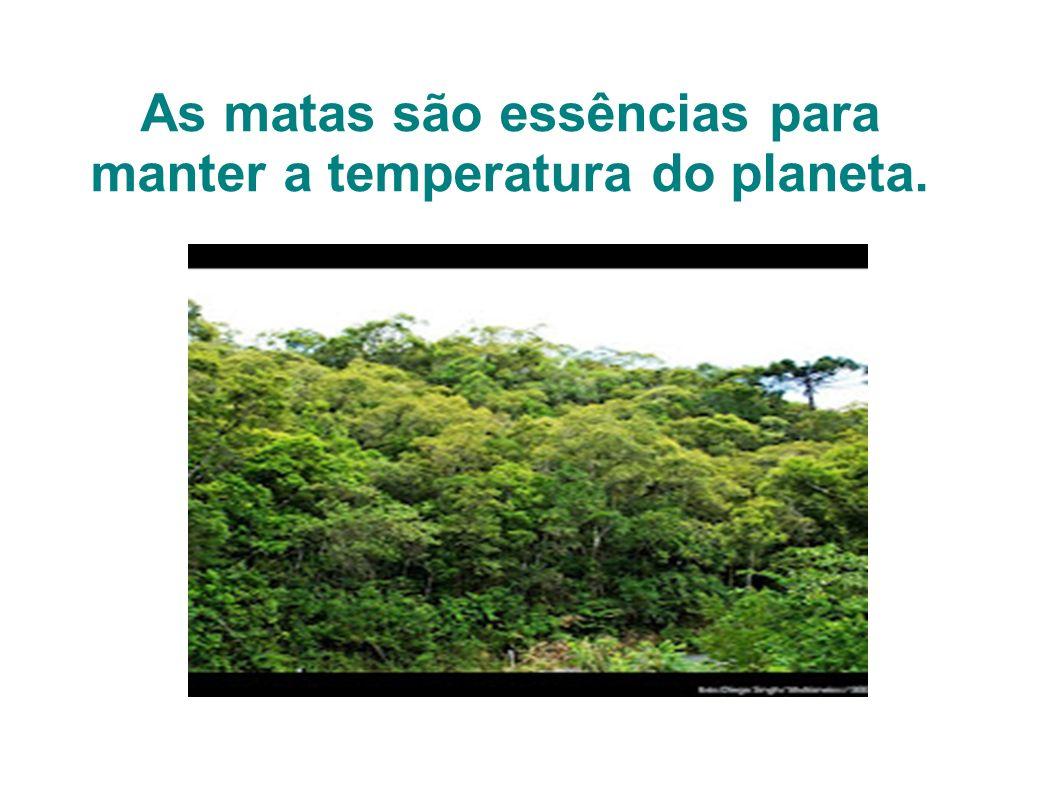 As matas são essências para manter a temperatura do planeta.