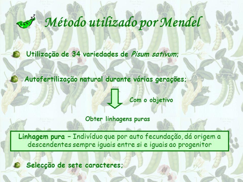 Método utilizado por Mendel Utilização de 34 variedades de Pisum sativum; Autofertilização natural durante várias gerações; Com o objetivo Obter linha