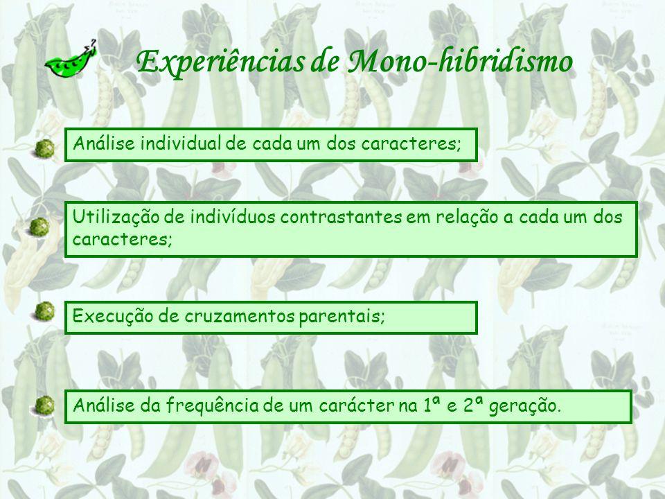 Experiências de Mono-hibridismo Análise individual de cada um dos caracteres; Utilização de indivíduos contrastantes em relação a cada um dos caracteres; Execução de cruzamentos parentais; Análise da frequência de um carácter na 1ª e 2ª geração.